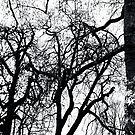 Tree - Kensington Gardens, London by MaggieGrace