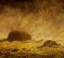 Textured Rocks at Sunrise by Emma  Gilette