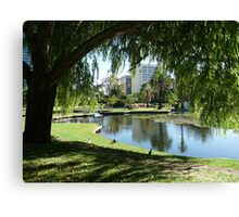 Willow Reflections, Queens Park WA Canvas Print