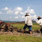 Thai farmers ploughing the field ready for the next season of rice growing. by Phil Bower