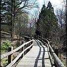 Nature's Walk © by Dawn M. Becker