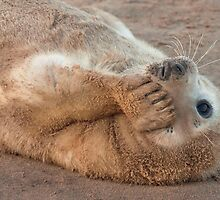 Seal Pup by John Dickson