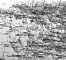 Sticks in the Water Black and White Abstract by Bo Insogna