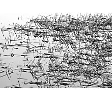 Sticks in the Water Black and White Abstract Photographic Print