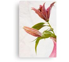 Mothers Day Lily  Canvas Print
