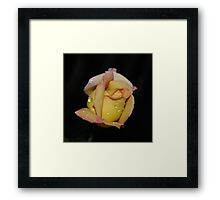 Fresh as the Morning Dew Framed Print