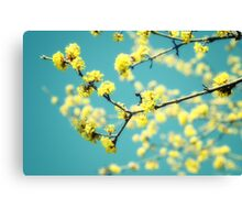 Yellow spring blooms Canvas Print