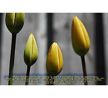 Spring Blossom 2012 04 Photographic Print