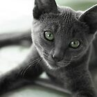 Grey Cat by Diana  Kaiani
