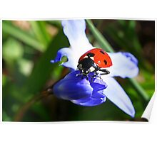 Lady on Spring Flower Poster