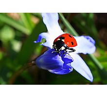 Lady on Spring Flower Photographic Print