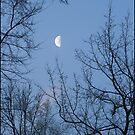 Moon Through the Trees by Jim Haley