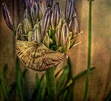 Springing Forth with Abundance by Wendi Donaldson Laird
