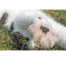 Talk to the Paw Photographic Print