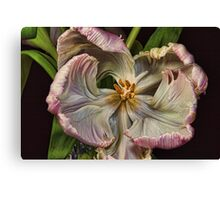 Cabbage Tulip Canvas Print