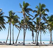 a row of palms by Anne Scantlebury