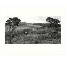 Kenmore Trees B&W Art Print