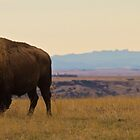 Bison with Black Hills by wanblake