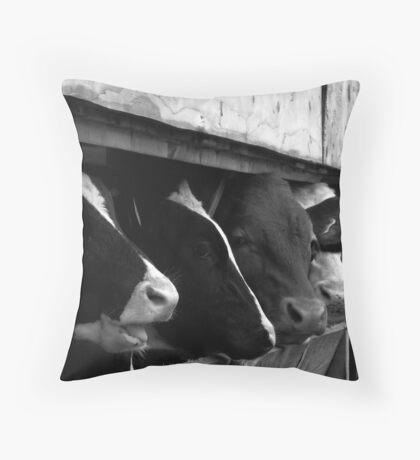 Grogarth Farm Cows Throw Pillow