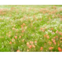 Dreamy Paintbrush Photographic Print