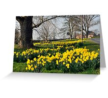 A Village of daffodils Greeting Card