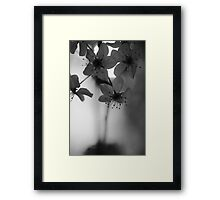 Late Eve Flowers 3.22.12 2 Framed Print