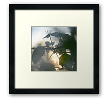 Late Eve Flowers 3.22.12 3 Framed Print