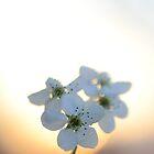 Late Eve Flowers 3.22.12 5 by Jason Franklin