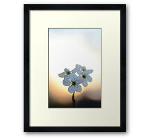 Late Eve Flowers 3.22.12 5 Framed Print