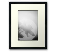 Late Eve Flowers 3.22.12 6 Framed Print