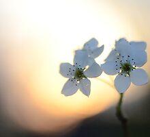 Late Eve Flowers 3.22.12 7 by Jason Franklin