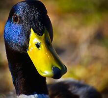 Mr. Mallard up Close and Personal by George I. Davidson