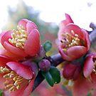 New buds of Spring by Tammy Devoll