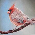 Cardinal on a cherry branch by lanadi
