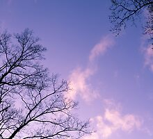 Tranquil Twilight of the Trees by David Lamb