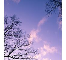 Tranquil Twilight of the Trees Photographic Print