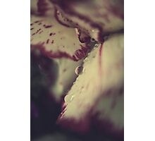 My Blood and Tears Photographic Print