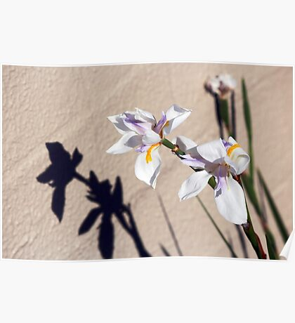 Dietes Poster