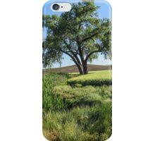 Lone Cottonwood iPhone Case/Skin