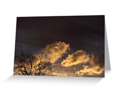 Sunset and the Hickory Tree Greeting Card