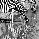 Nature in Black and White by Linda Sparks