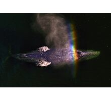 Whale Space Photographic Print