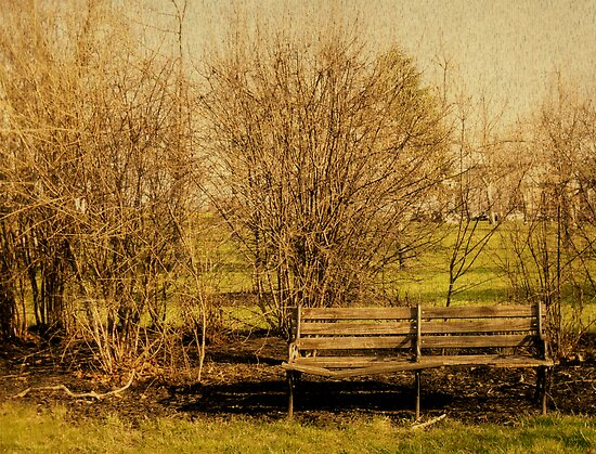 Bench by Kerri Swayze