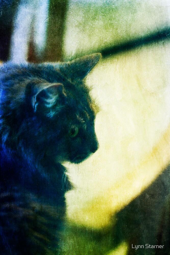 Chloe in the window by Lynn Starner