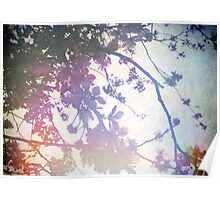 Spring Glory Poster
