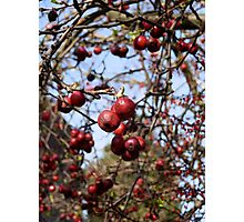 Berry nice Photographic Print