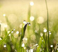 Das EINE unter Vielen by Aviana