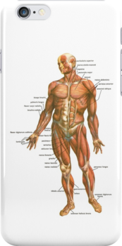 Body Muscles by Ommik