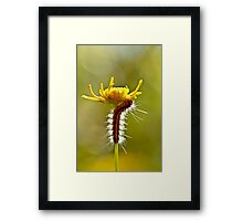 Up up I go ....... Framed Print