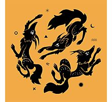 Dancing Wolves Photographic Print